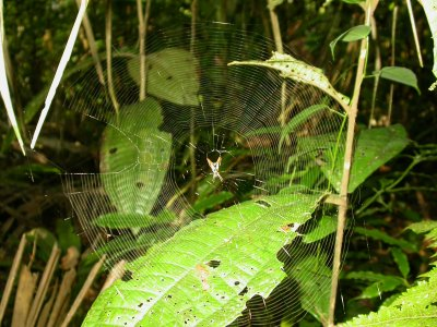 Picture of forest spider's web